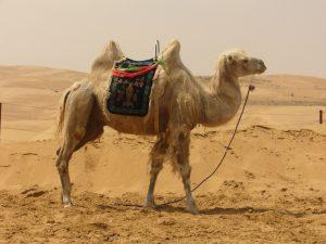 Woestijnsafari in Dubai